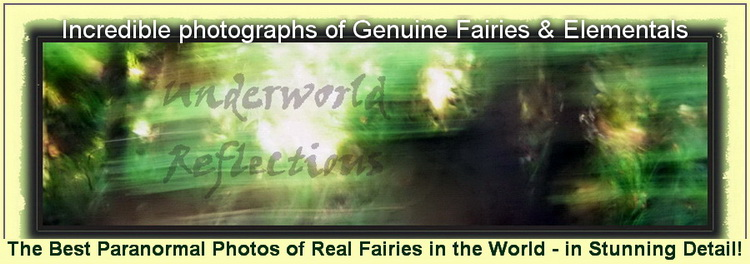 Visit the Underworld Reflections Gallery & See Real Fairies